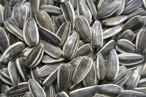 sunflower-seed